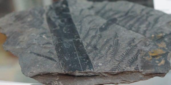 foty-mineraly-skamienialosci05