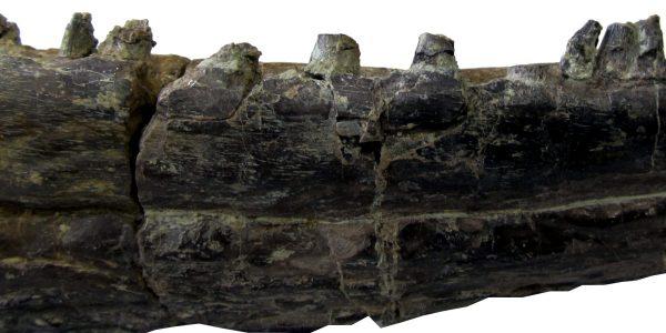Muzeum-zuchwa-metopozaura